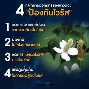 Arshitong Gold 015